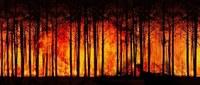 Incendi nei boschi, prorogato fino all'8 agosto in Emilia-Romagna lo stato di grave pericolosità