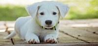 Lavori presso l'Area sgambamento cani