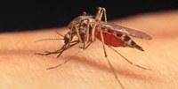 West Nile Virus: attenzione alle punture delle zanzare